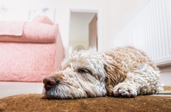 4 Useful Tips for Pet-Proofing Your Home